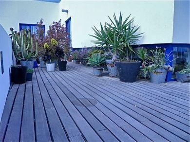 garden in the terrace